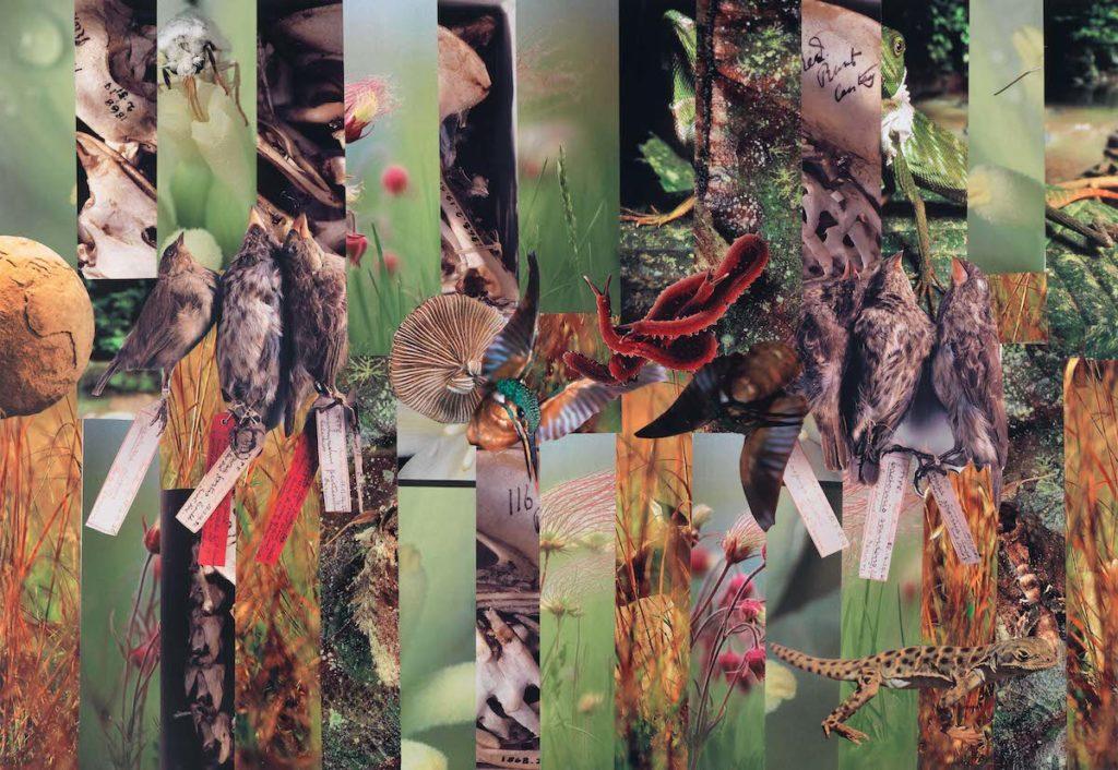 Collage. Credits: Dr. Kerstin Gernig