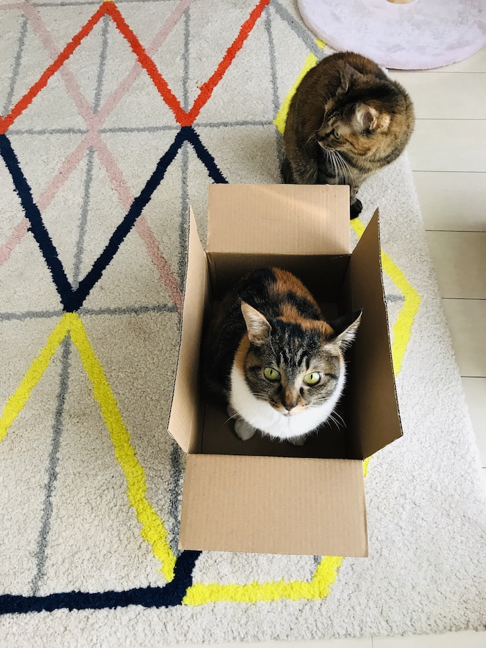 Aiko's cats are her models. Credits: Aiko Fukawa